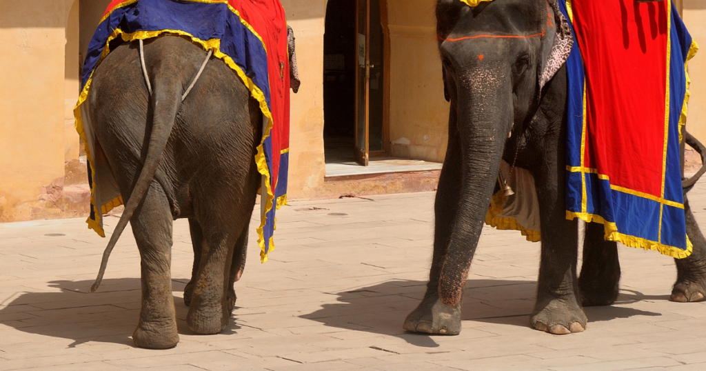 Why you should not ride on an elephant's back